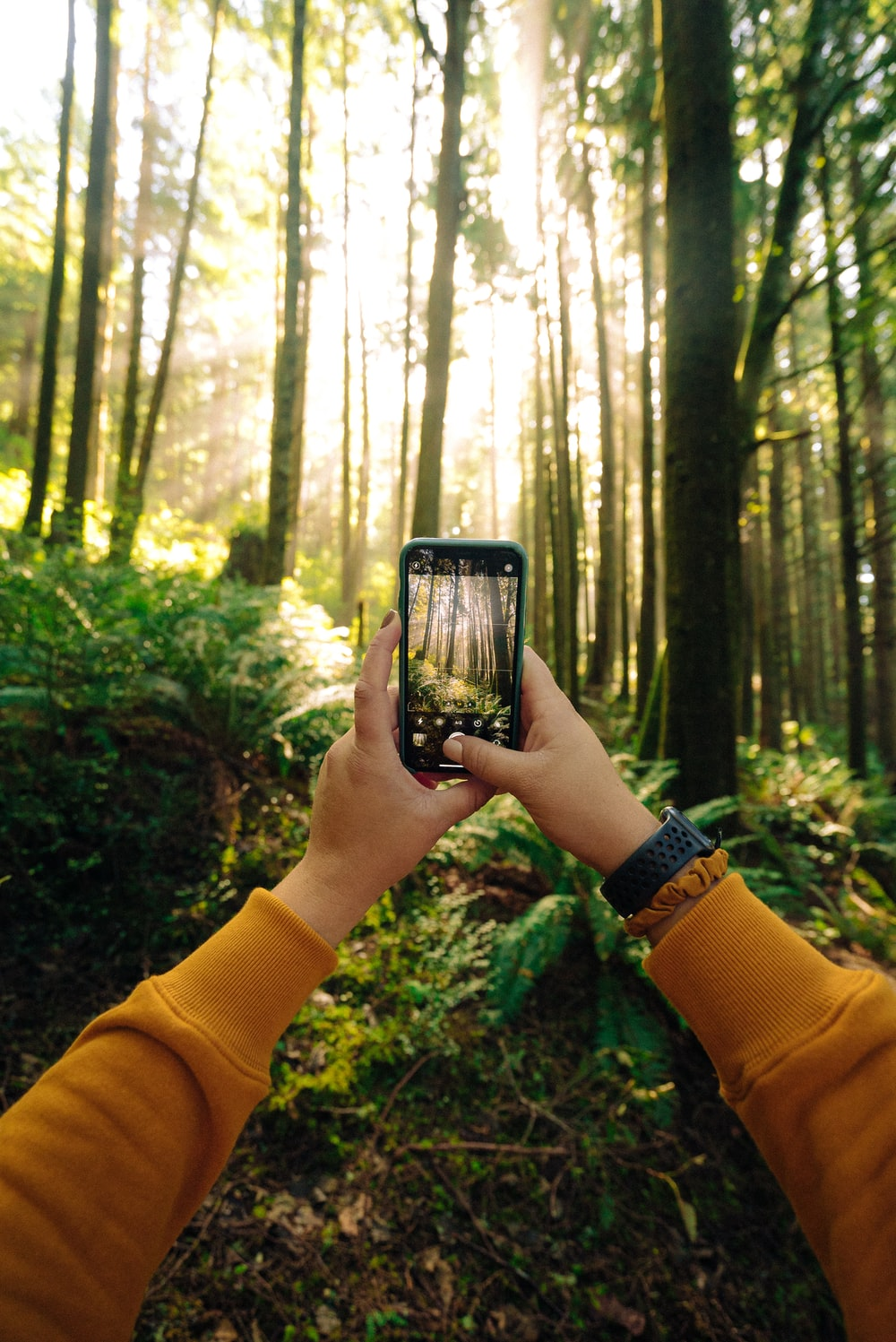 person holding black smartphone taking photo of green trees during daytime