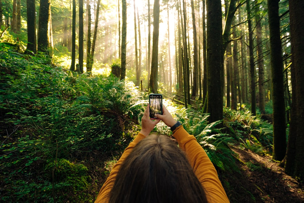 woman in yellow jacket taking photo of green trees during daytime