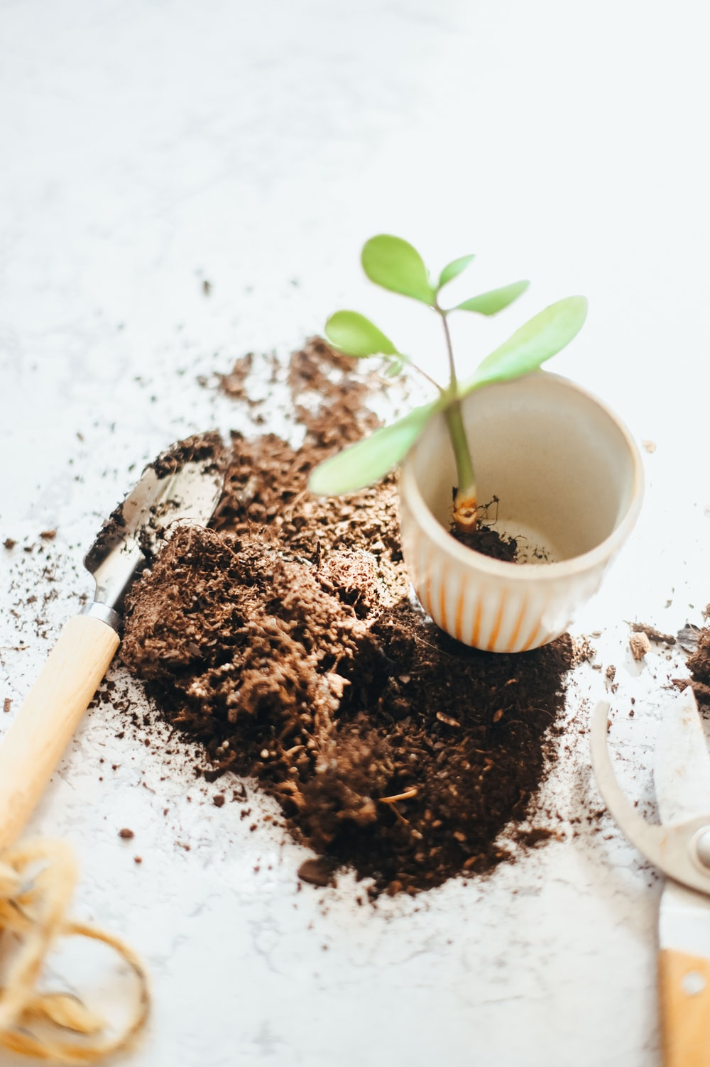 white ceramic cup with brown powder and green plant