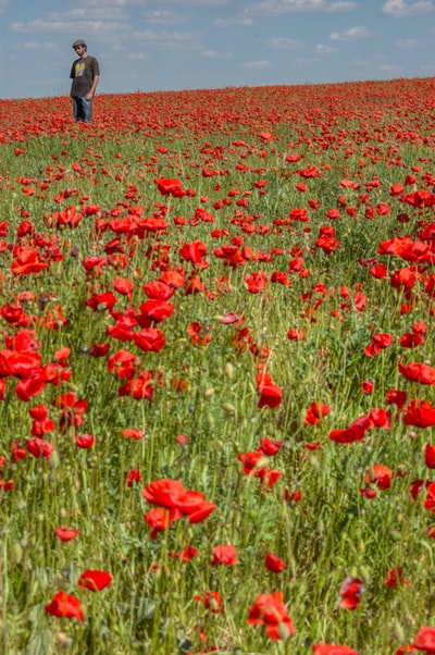 Man standing on a poppies field during day time