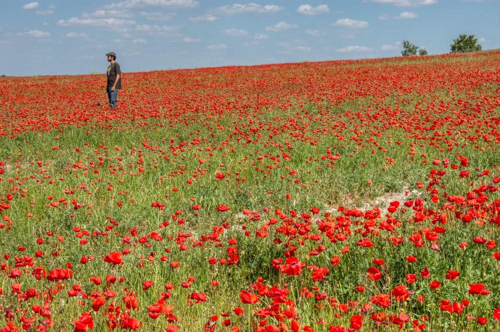 man in black jacket walking on red flower field during daytime