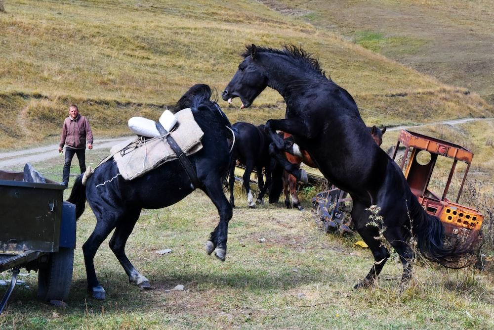 man in white shirt riding black horse during daytime