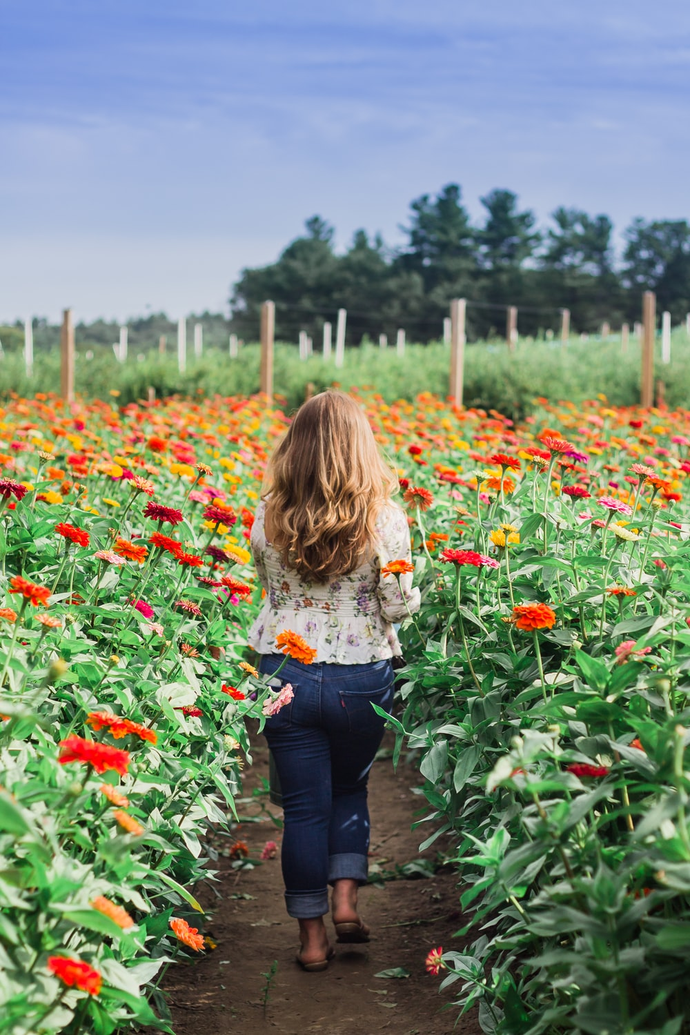 woman in white long sleeve shirt and blue denim jeans standing on red flower field during