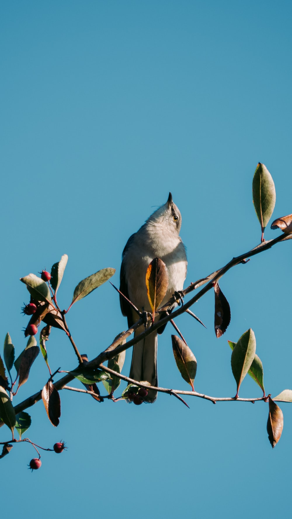 gray and white bird on tree branch during daytime