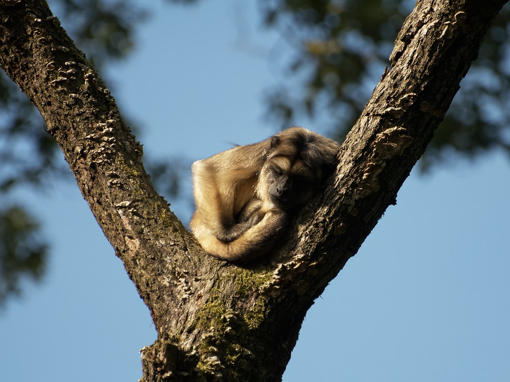 brown monkey on brown tree branch during daytime