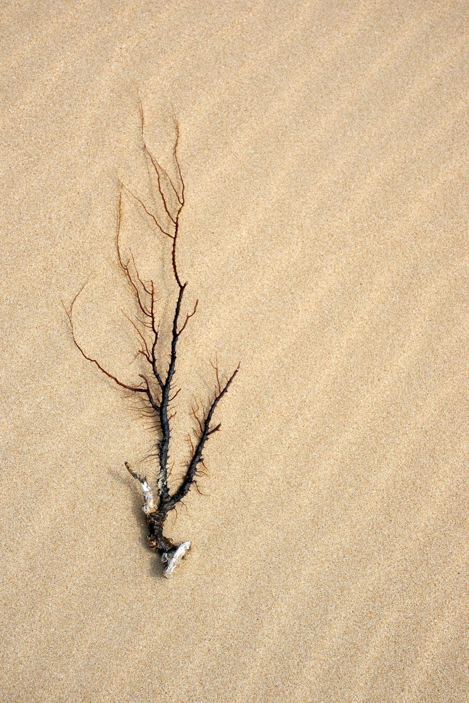 brown leafless tree on brown sand