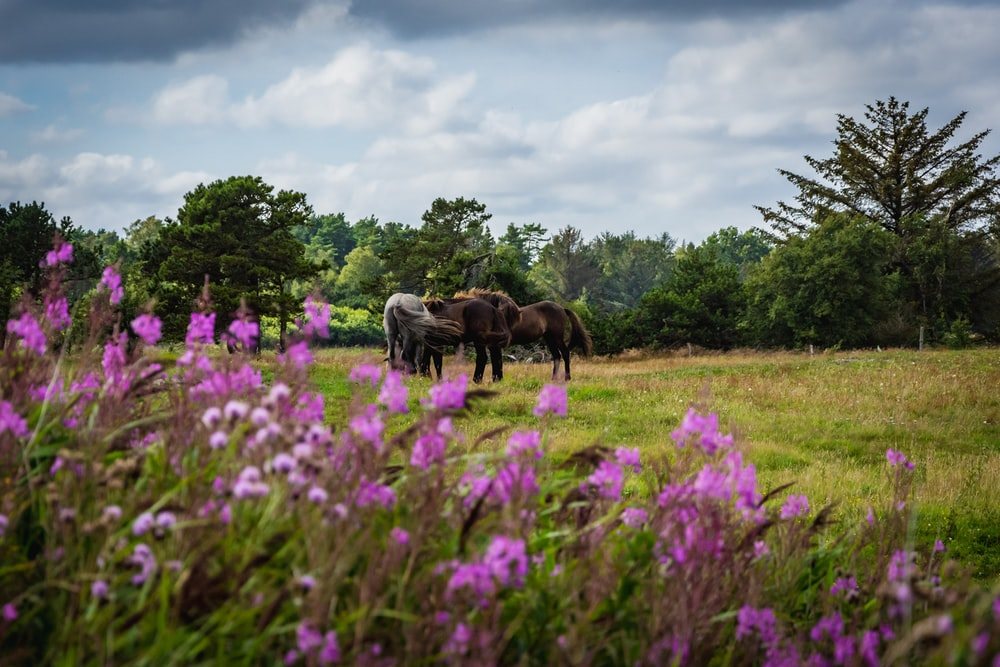 brown horses on green grass field during daytime