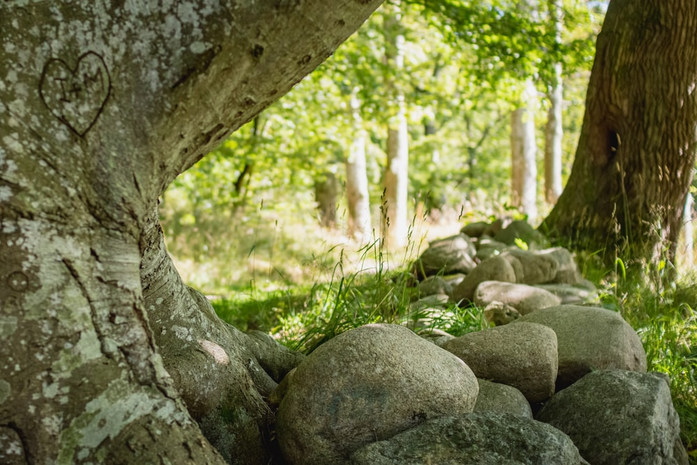 gray rocks on green grass field during daytime