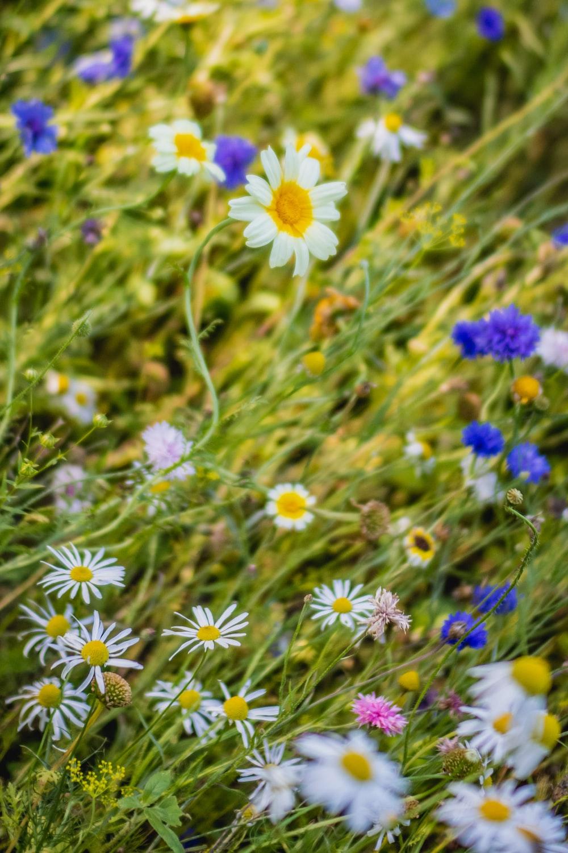 purple and white flowers in tilt shift lens