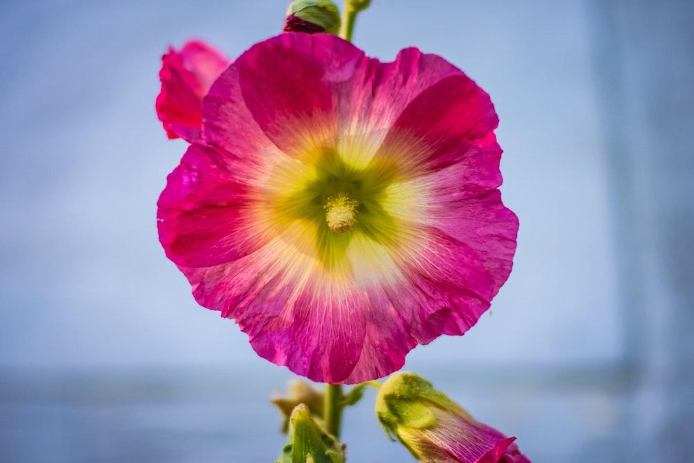 pink and yellow flower in tilt shift lens