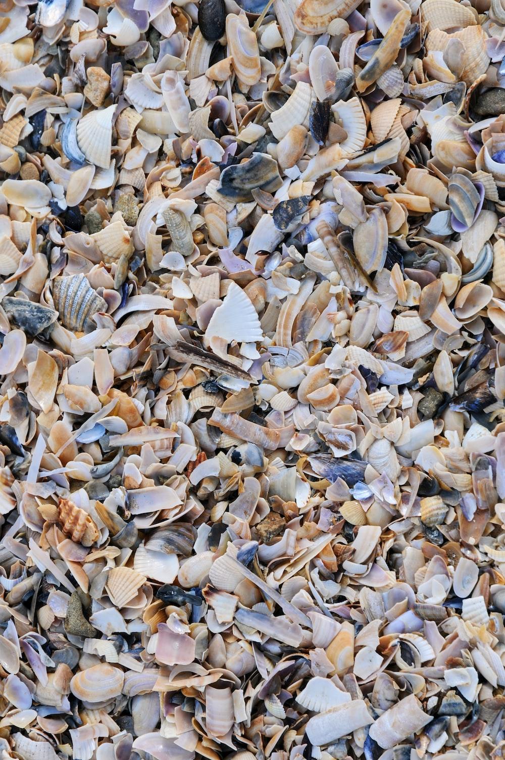 white and gray seashells on white sand