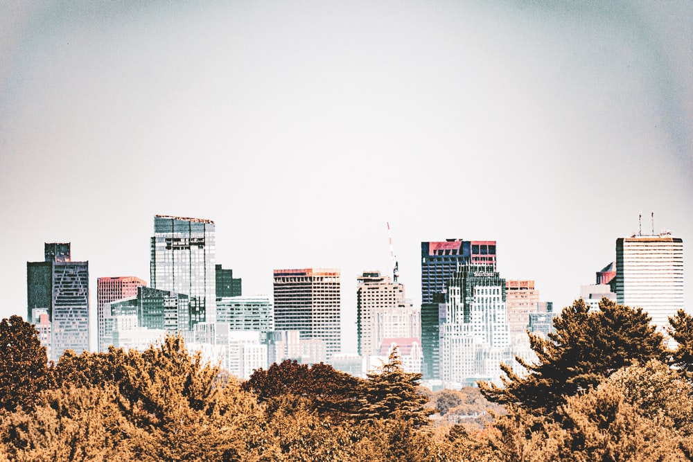 high rise buildings near trees during daytime