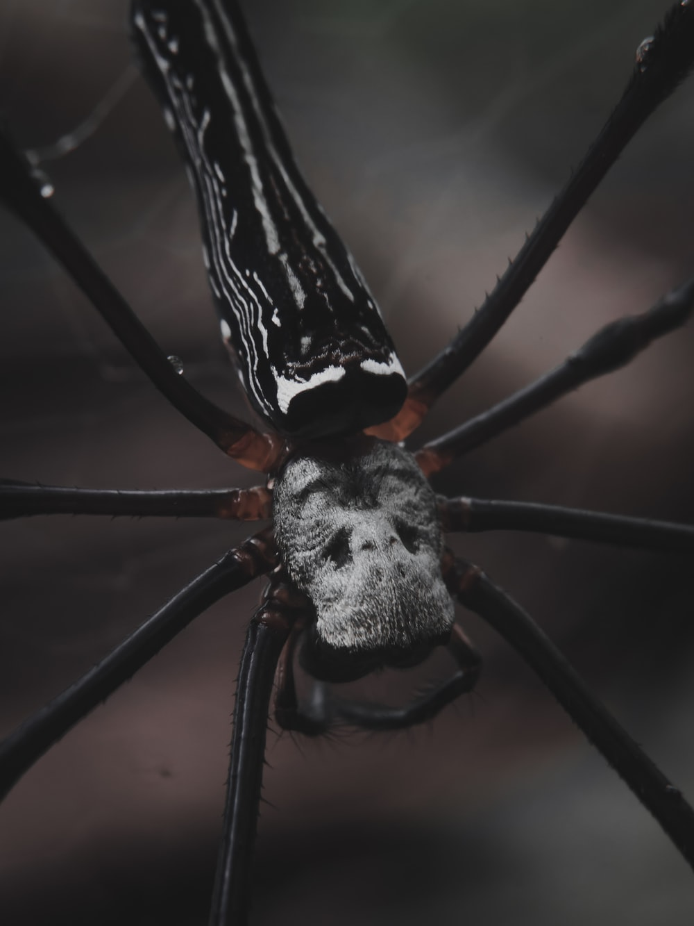 black and white spider on web in close up photography during daytime