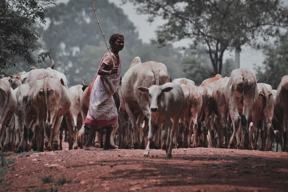 man in brown coat standing in front of white cow