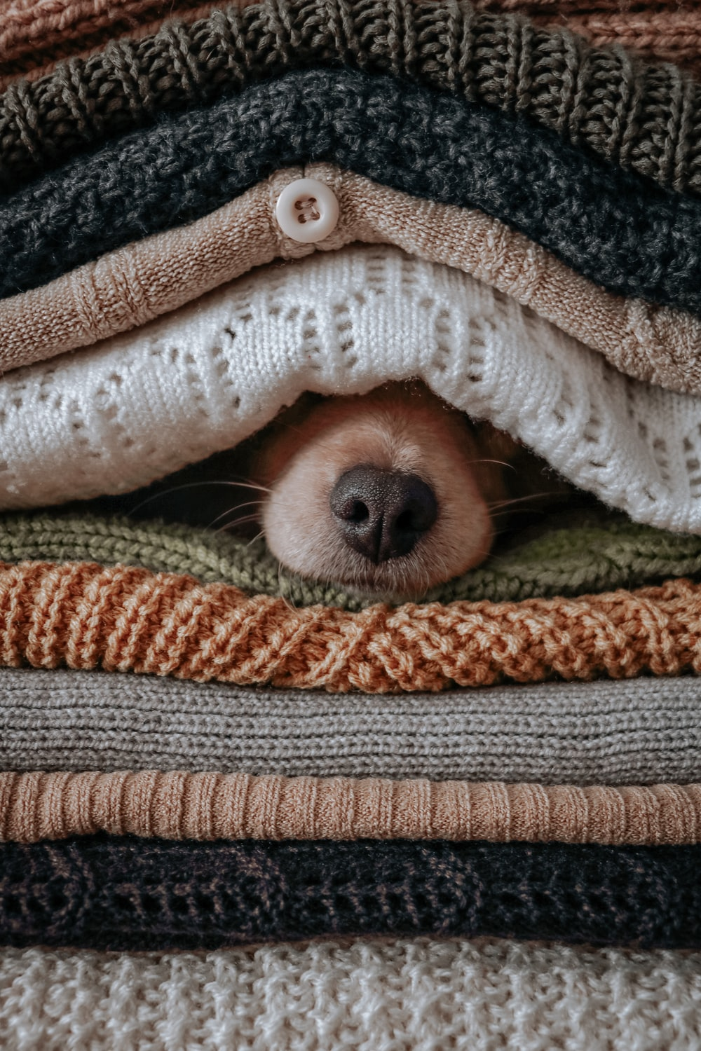 brown and white dog covered with green and white blanket