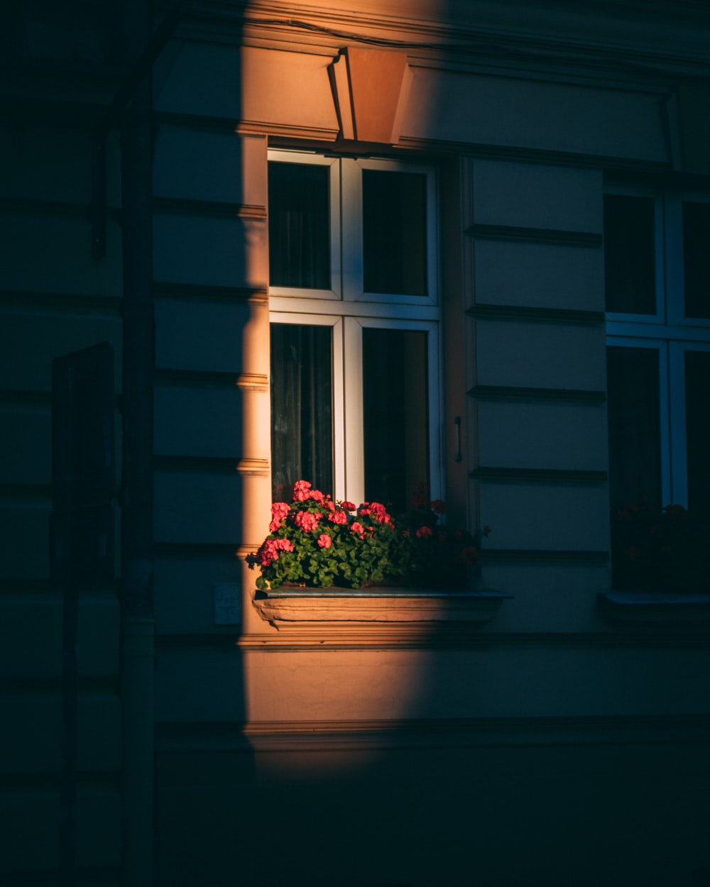 green plant on white pot beside window