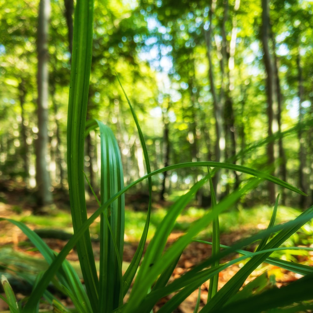 green grass in forest during daytime
