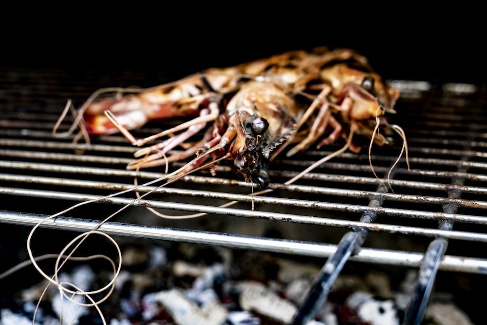 grilled shrimp on black metal grill