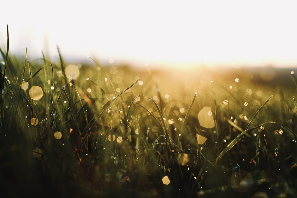 green grass with water droplets during daytime