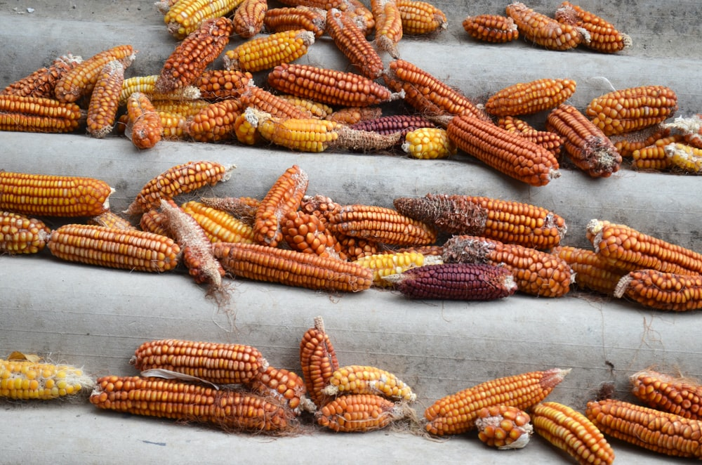 yellow and red corn lot