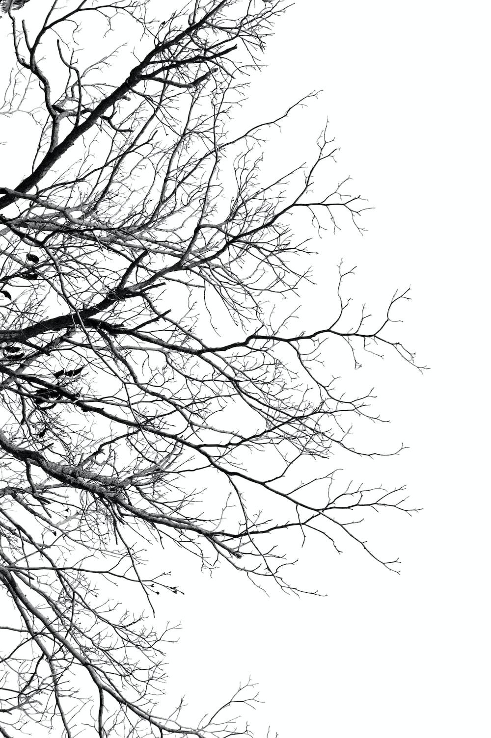 black and white tree illustration