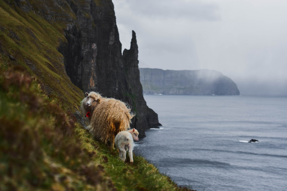 white sheep on green grass field near body of water during daytime