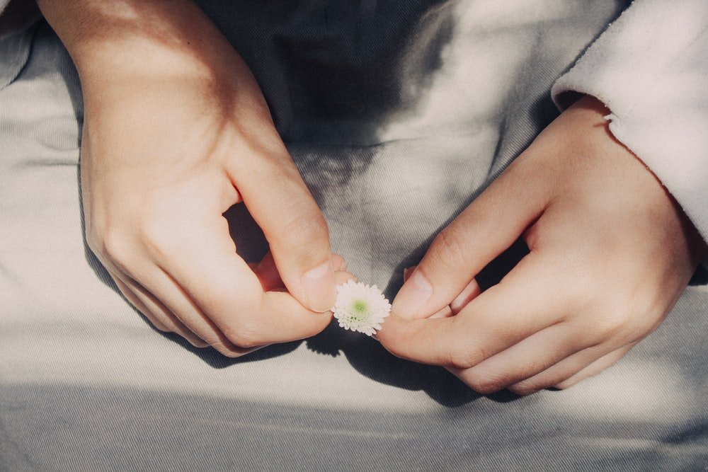 person holding white and green flower
