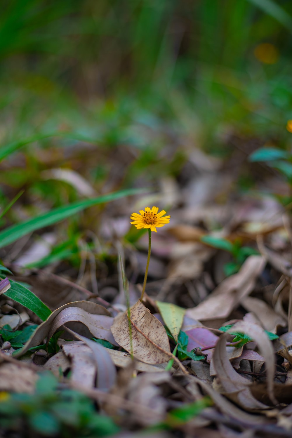 yellow flower on brown dried leaves