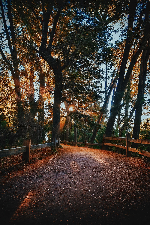 brown pathway between trees during daytime