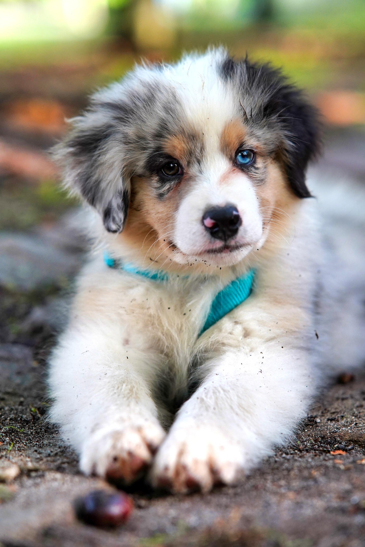 puppy, unisex dog names