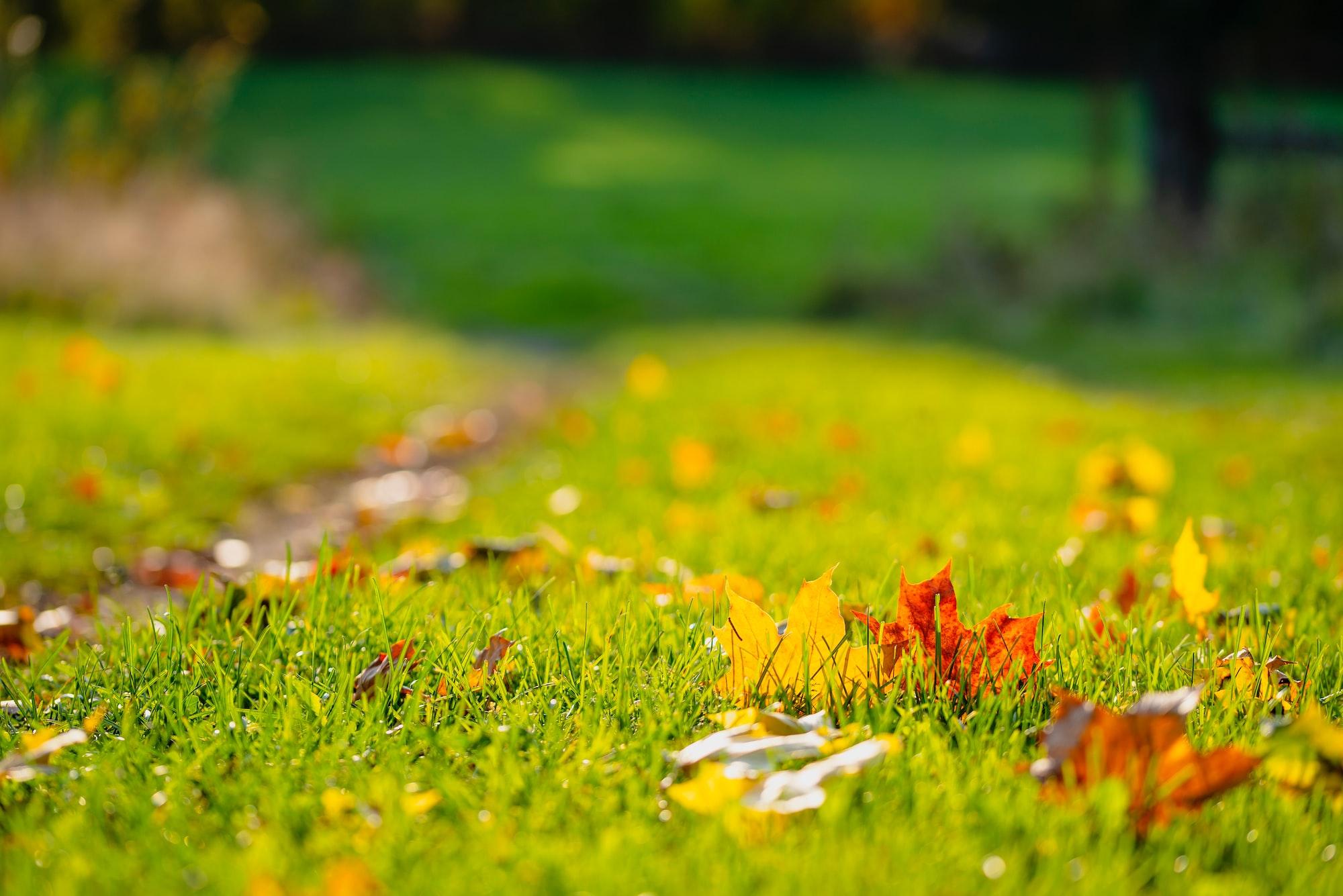 Getting Your Yard Fall Ready