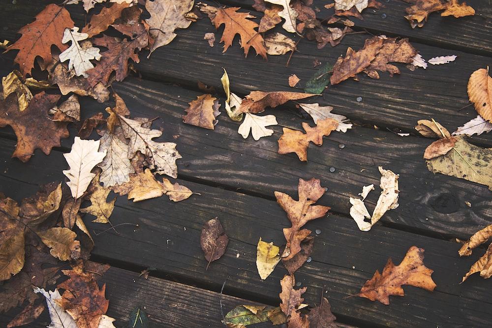 brown dried leaves on brown wooden floor