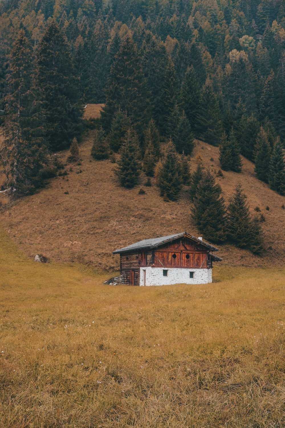 white and brown wooden house on green grass field