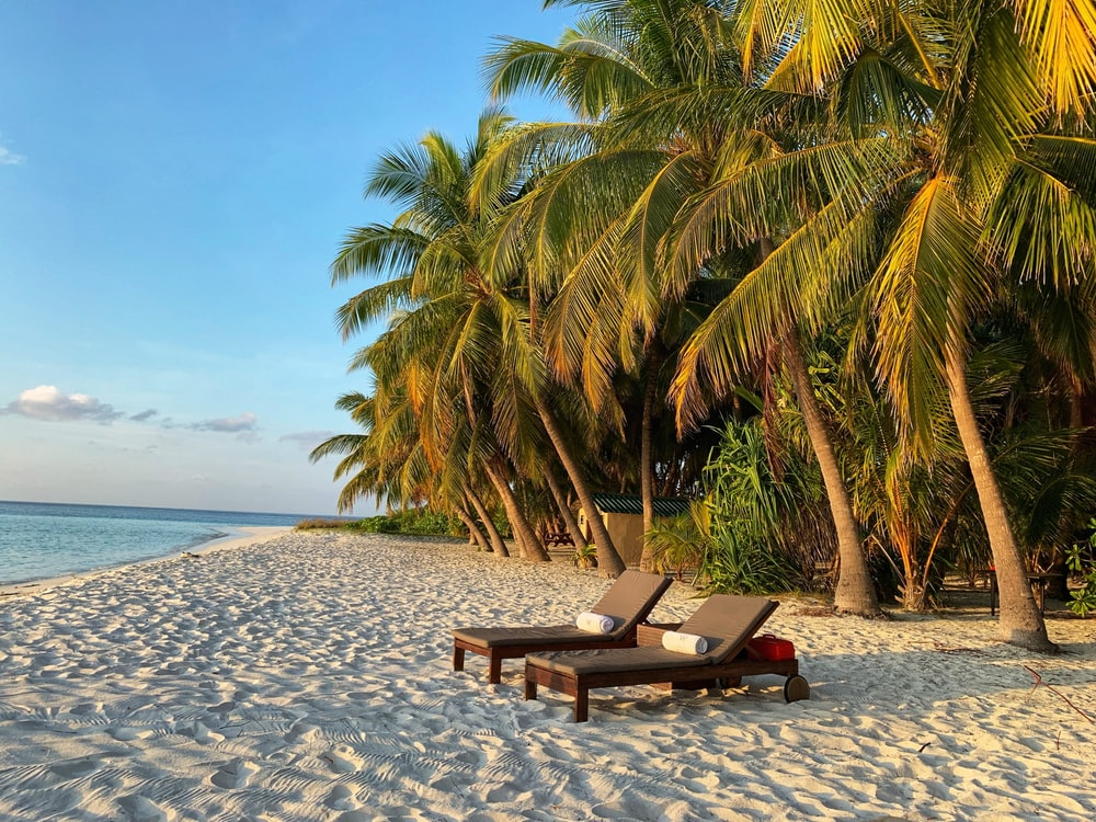 brown wooden bench on beach during daytime