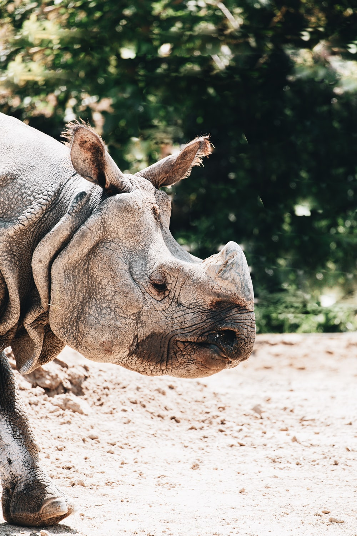 brown rhinoceros on brown soil during daytime
