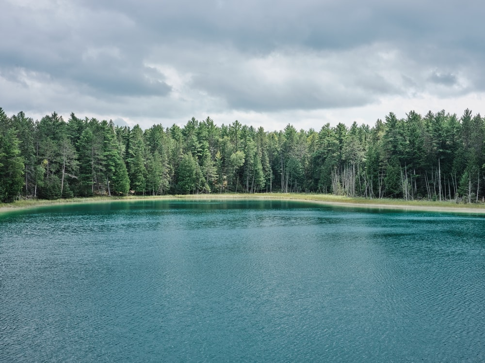 green trees beside blue body of water under white clouds during daytime