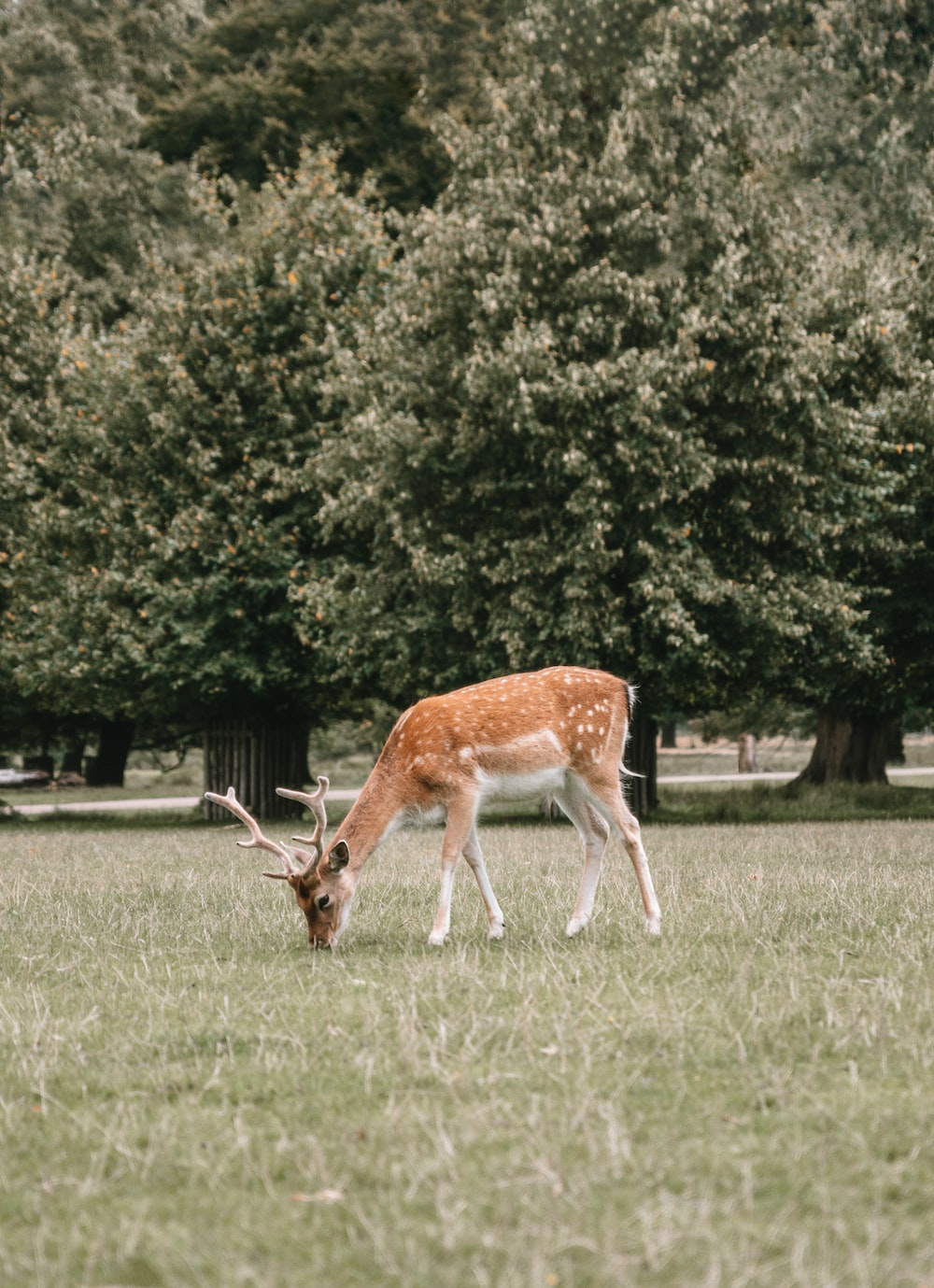 brown deer on green grass field during daytime