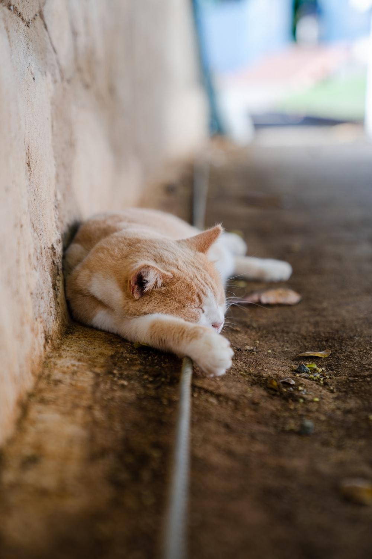 orange tabby cat lying on ground