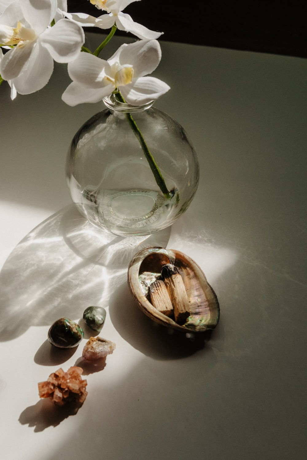 white moth orchids in clear glass vase