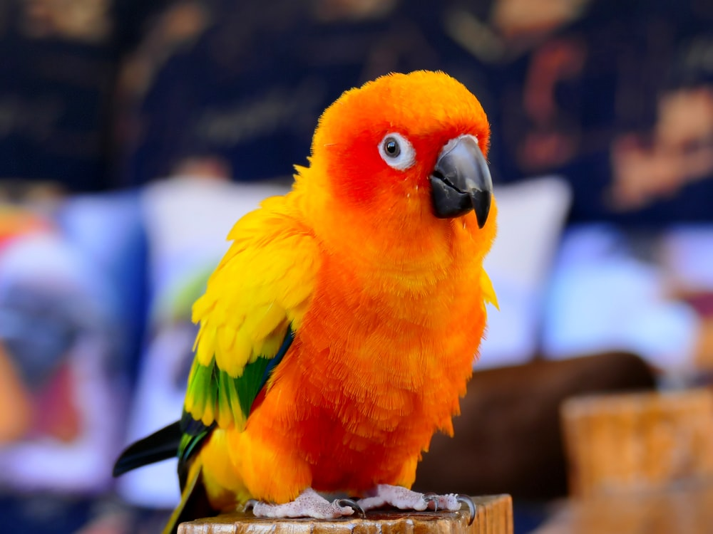 yellow red and green bird