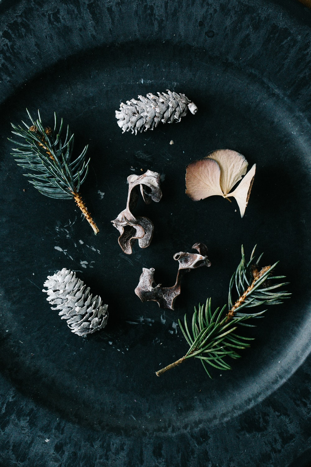 white and brown pine cones on black round plate