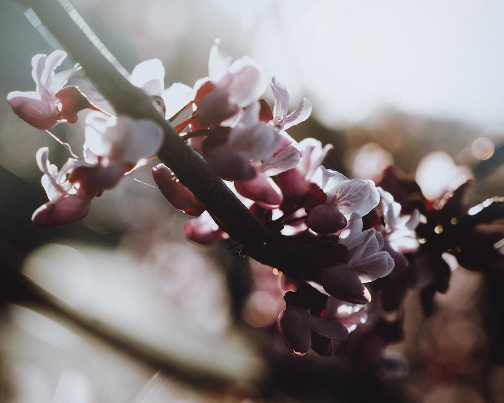 white and pink flower in tilt shift lens