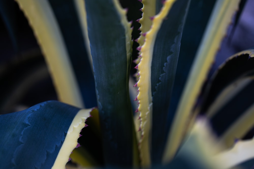 green and yellow plant in close up photography