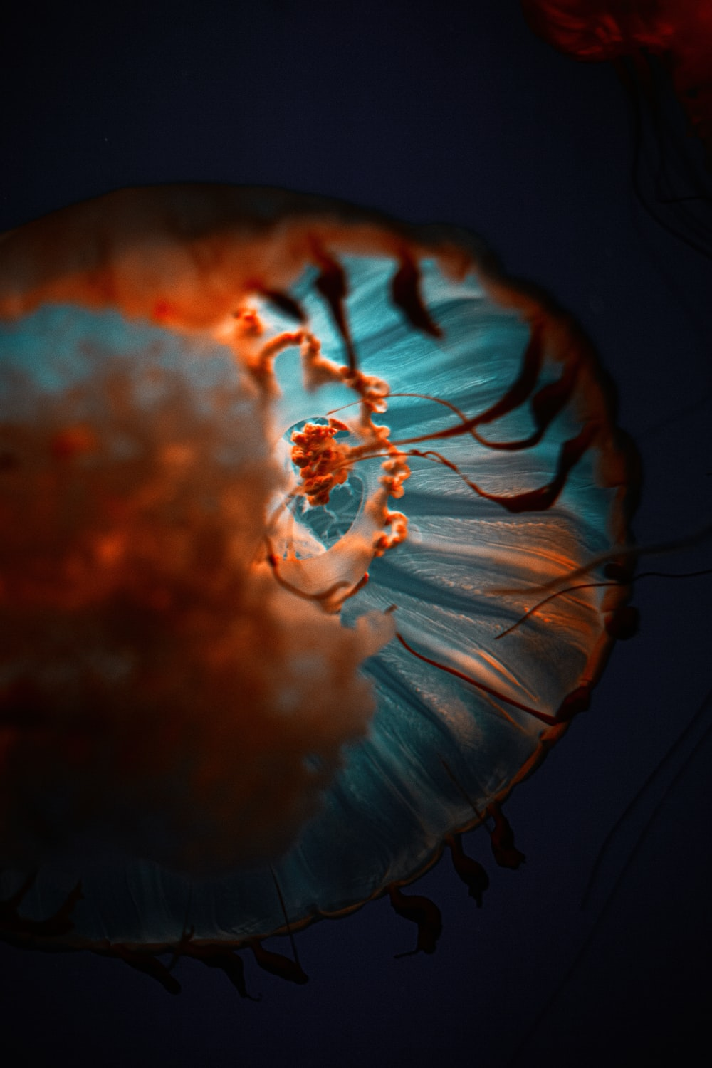 blue and white jelly fish
