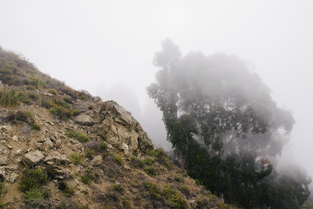 green trees on mountain during foggy day