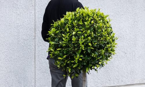 bush pickup line