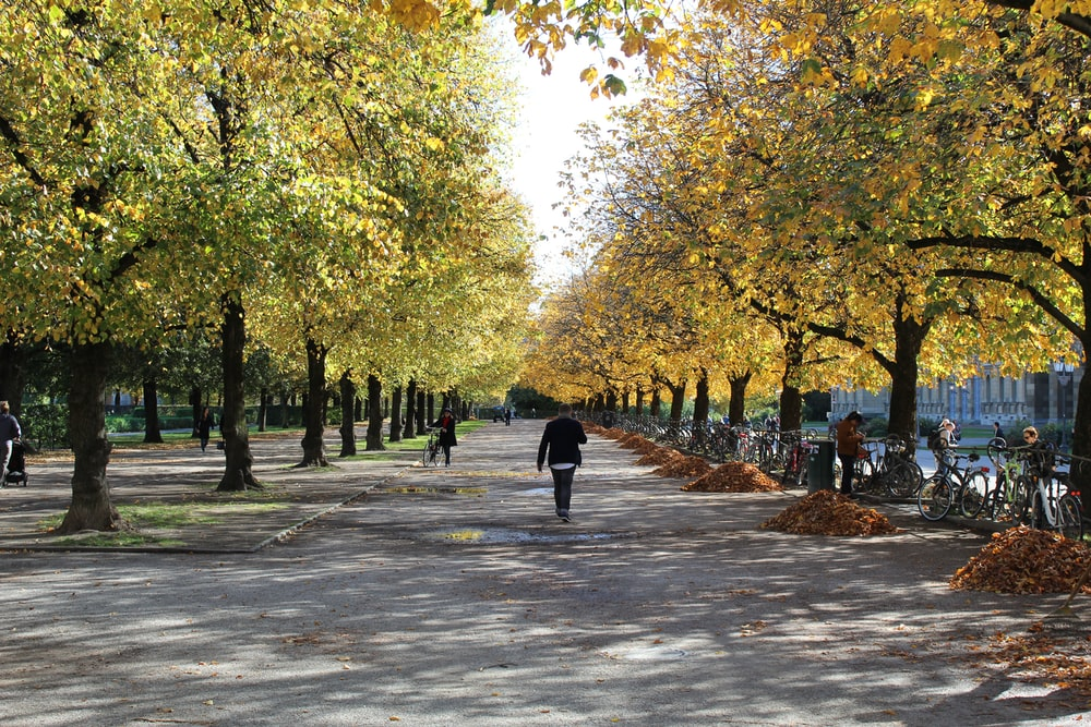 people walking on gray concrete road surrounded with green trees during daytime