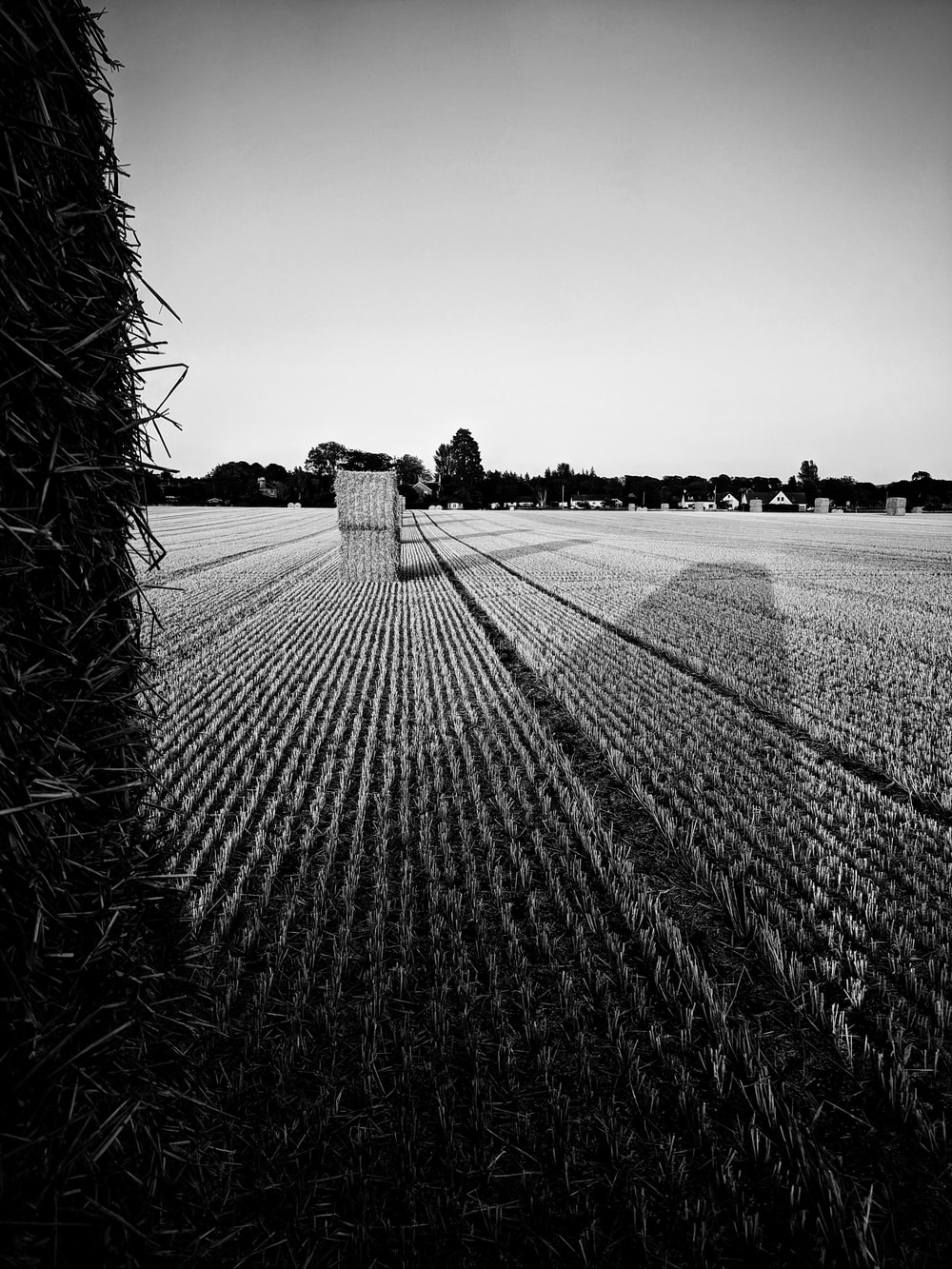 grayscale photo of a farm field