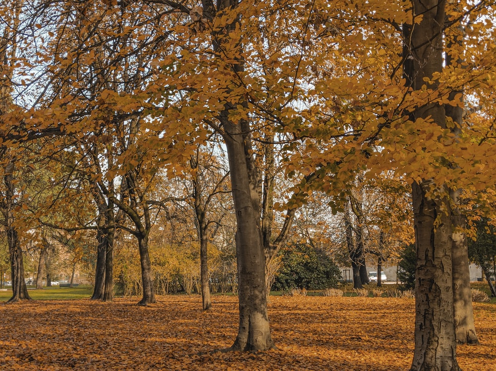 brown and yellow trees on brown grass field during daytime