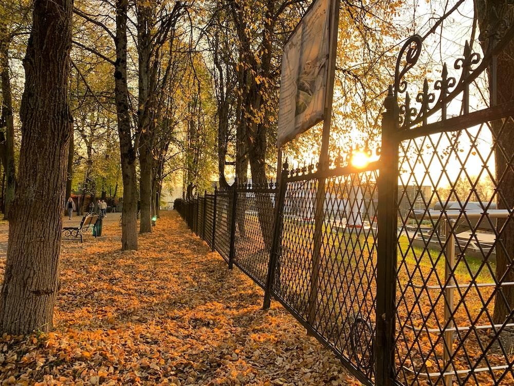black metal fence near trees during daytime